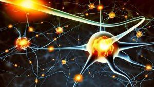 role-of-serotonin