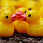 ducks-1339564_960_720