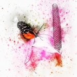 〜最初に蝶が生まれたお話〜 喜びに満たされ、変容しつづけるメディスン